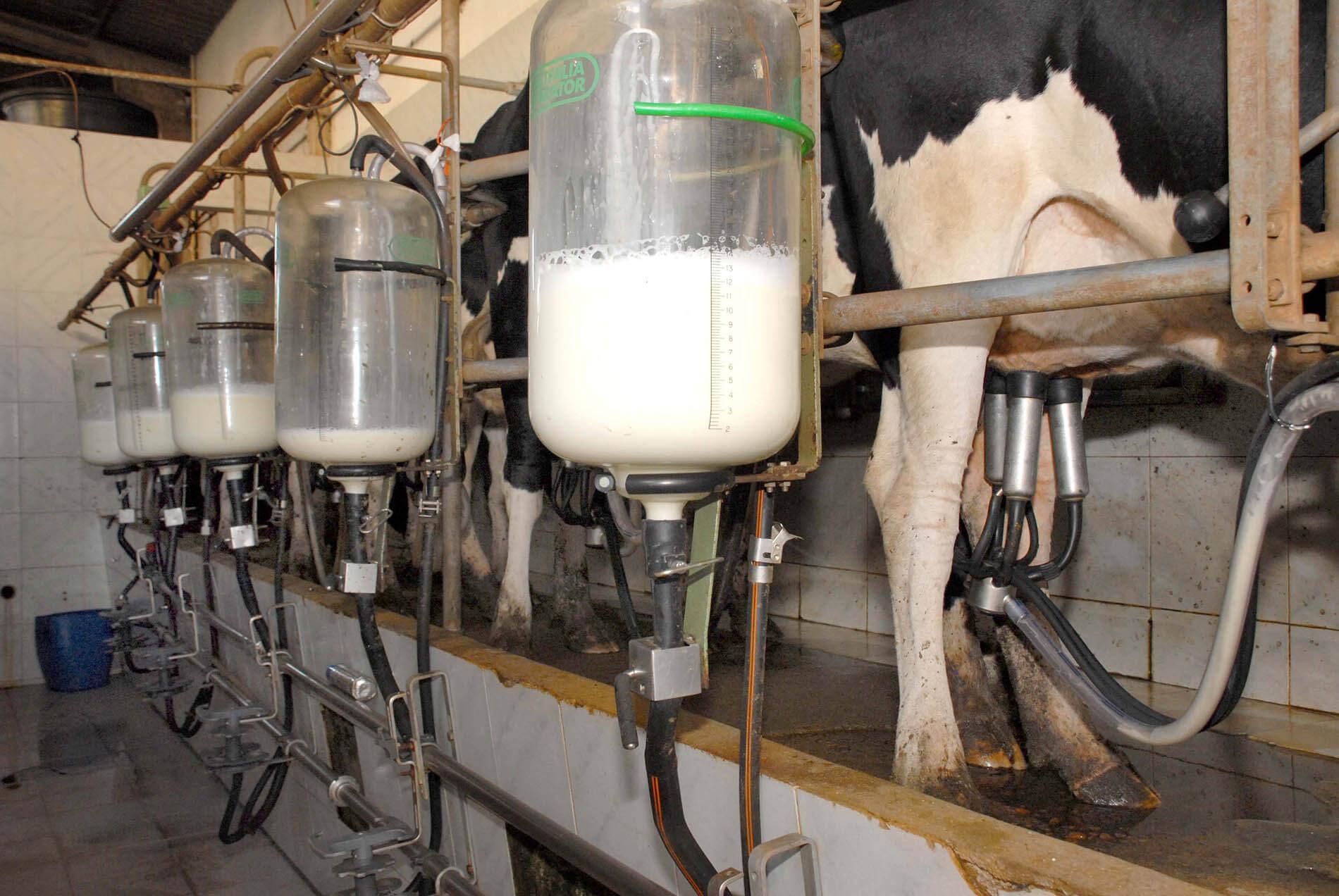 You are currently viewing URGENTE: Novas regras para produção de leite entram em vigor em todo o país